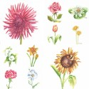10 most interesting watercolor flower series